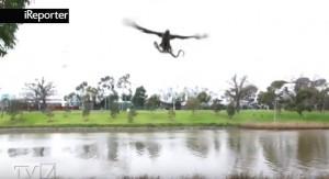 YOUTUBE Falco aggancia serpente e lo lancia su famiglia che fa barbecue