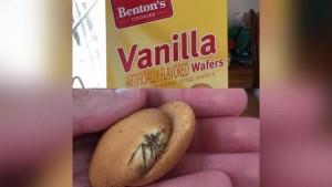 FOTO Ragno nei biscotti della figlia: ALDI si scusa e gli dà 5 dollari