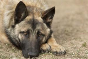 Lasciare il cane da solo in giardino è reato: lo dice la Cassazione