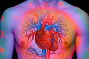 Guarda la versione ingrandita di Circolazione del sangue perfetta per vivere più a lungo: il segreto dei novantenni del Cilento