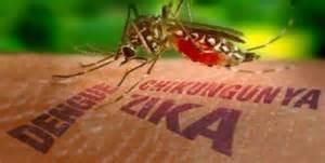 Reggio Emilia: contrae la dengue in un viaggio in Thailandia