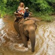 Elefante innamorato calpesta proprietario e scappa per inseguire femmina02