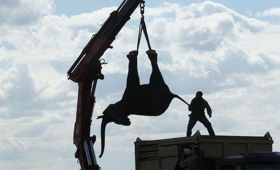 elefanti malawi