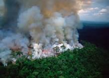 Guarda la versione ingrandita di Incendi in Amazzonia