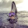 Sub scatta un selfie nell'oceano e dietro spunta...una balena FOTO