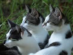 Un gruppo di gatti