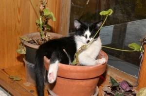 Guarda la versione ingrandita di Gatti, basta una bottiglia d'acqua per allontanarli dalle piante...