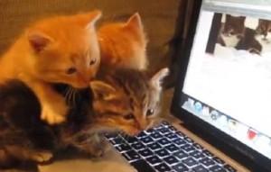 Gatti, killer coccoloni: minaccia per toxoplasmosi e...