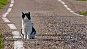 Evita gatto e finisce fuori strada: auto distrutta, salva per miracolo