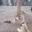 Cucciolo di cane che riesce ad allontanare tre leoni