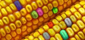 Ogm: i giganti della farmaceutica e delle sementi ingegnerizzate si fondono. Ma dagli Usa, il Wall Street Journal segnala le difficoltà degli agricoltori