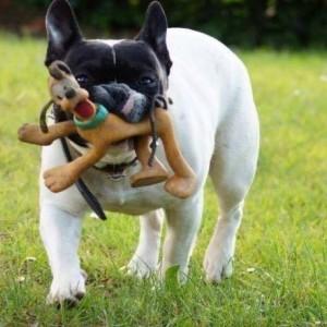 Pato, il cane scomparso e ritrovato dopo 3 anni, è morto
