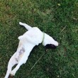 Pato, il cane scomparso e ritrovato dopo 3 anni, è morto 3
