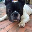 Pato, il cane scomparso e ritrovato dopo 3 anni, è morto 4