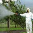 Pesticidi: la terbutilazina ha invaso le acque del bacino del Po