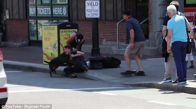 VIDEO YOUTUBE Il terribile attacco del pit bull al cucciolo di beagle