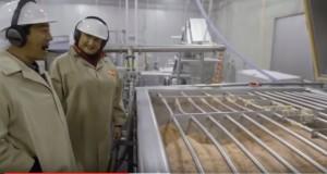 McDonald's, come vengono fatte le crocchette di pollo McNuggets