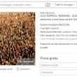 """Virginia Raggi, fotografo accusa: """"Foto su Facebook è mia, un concerto di Guetta"""" 4"""