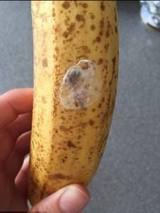 Comprano banane al supermarket, ragni velenosi gli infestano la casa