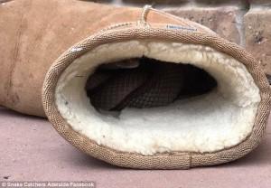 Una foto del serpente pubblicata su Facebook