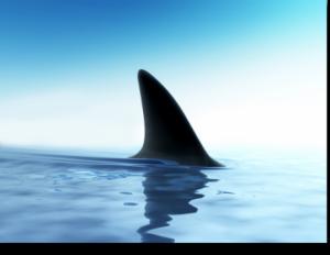 Rapallo (Genova), squalo di due metri si arena sulla spiaggia