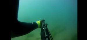 YOUTUBE Squalo lo attacca sott'acqua, studente si difende col fucile da pesca