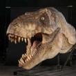 T-Rex, nuovi resti di dinosauro trovati a Hell Creek