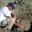 T-Rex, nuovi resti di dinosauro trovati a Hell Creek 4