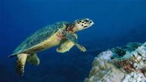 Una tartaruga marina
