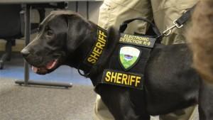 Url, il cane poliziotto che fiuta i file proibiti
