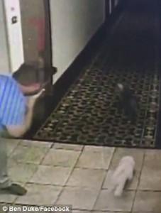Cane incastrato con guinzaglio nell'ascensore, direttore albergo lo salva