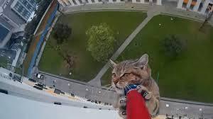 Guarda la versione ingrandita di YOUTUBE Gatto sul cornicione al dodicesimo piano: ecco come lo salvano