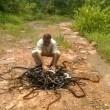 """India, libera 285 serpenti nella foresta: """"Sono nostri amici""""2"""