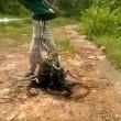 """India, libera 285 serpenti nella foresta: """"Sono nostri amici""""5"""