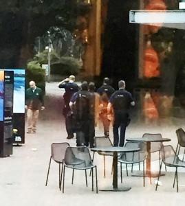 Londra, gorilla spacca vetro zoo e scappa da recinto: catturato dopo un'ora e mezzo7