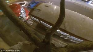 Guarda la versione ingrandita di YOUTUBE Londra, salta dall'albero sul tetto del bus a due piani