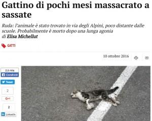 Gattino ucciso a sassate: la carcassa in mezzo alla strada vicino alle scuole