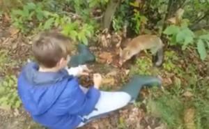 VIDEO Il bambino e la volpe: la particolare amicizia di Giacomo e Bacca