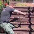 Serpente marrone non si fa catturare la lotta col cacciatore