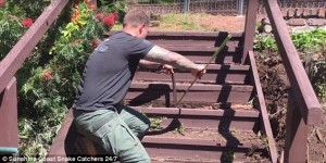 Guarda la versione ingrandita di YOUTUBE Serpente marrone non si fa catturare: la lotta col cacciatore