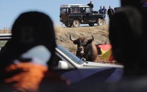 """Guarda la versione ingrandita di YOUTUBE-FOTO Spagna, tori provocati e infilzati dalle auto: """"Encierro"""" diventa crudele"""