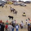 Spagna, tori provocati e infilzati dalle auto3