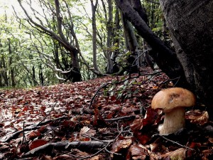 Albano Crocco esce per cercare funghi: trovato morto, d********o