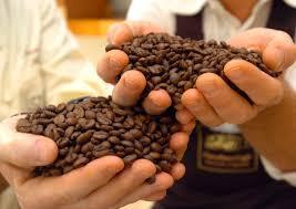 Guarda la versione ingrandita di Cibi in estinzione: nel 2080 non c'è più caffè, miele, banane...