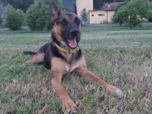 Roma, cane ingerisce droga a piazza Vittorio e muore