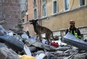 Terremoto 30 ottobre: cani in Valnerina cominciano a ululare mezzora prima