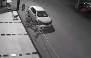 Branco di cani randagi distrugge auto senza alcun motivo