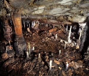 A caccia di pellicce nel Paleolitico: così si è estinto il leone della caverna