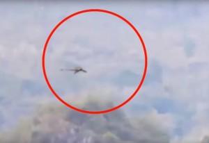 Cina, strana creatura in volo: drago o pterodattilo?