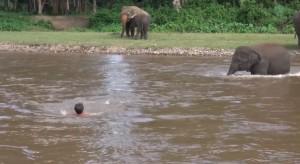 Elefantino salva ranger che fa finta di annegare